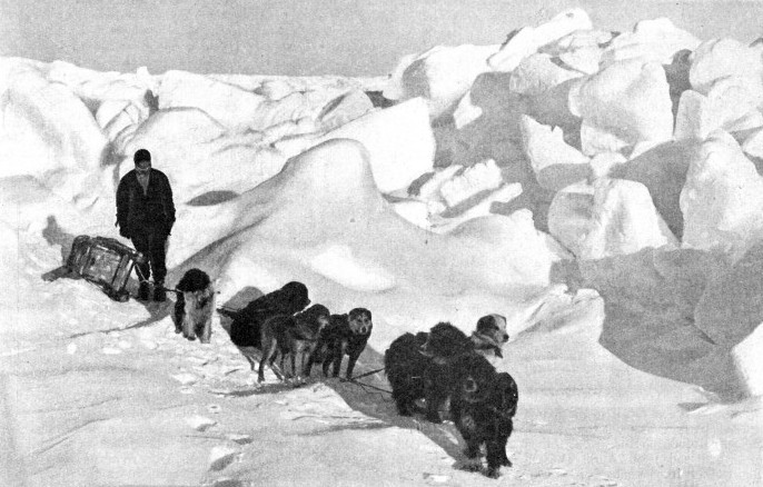 ESKIMO DOGS, OR HUSKIES, play an important part in most Antarctic and Arctic expeditions
